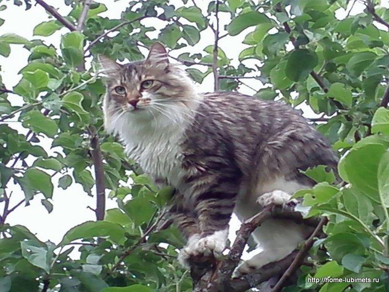 Потерянный кот