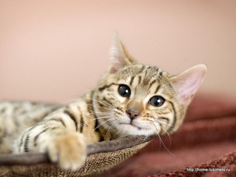 Кошка, бездомная кошка. Без имени и угла...