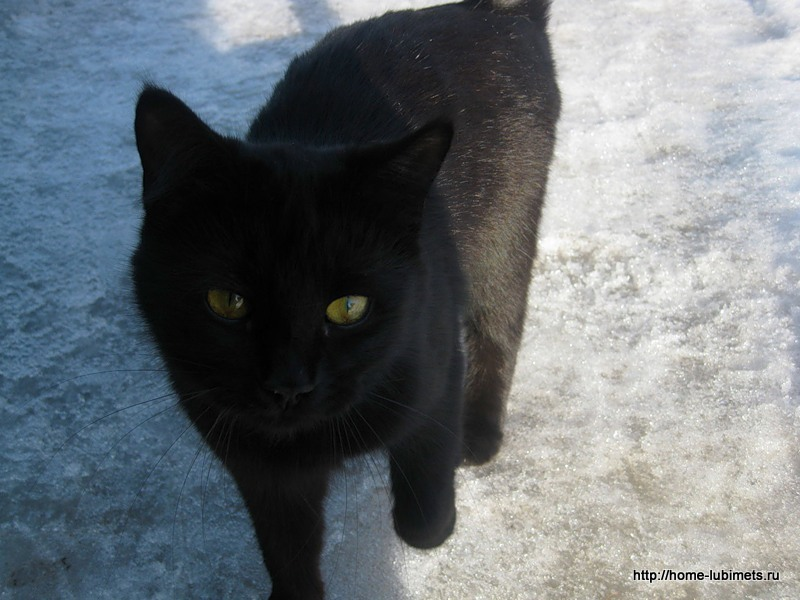 Кошки зимой