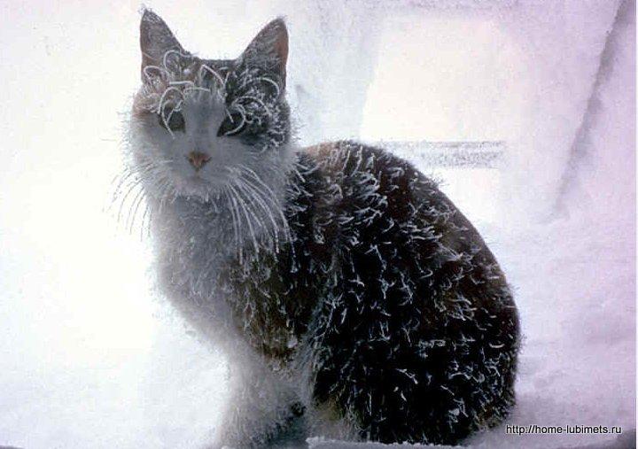 Бездомные кошки домик