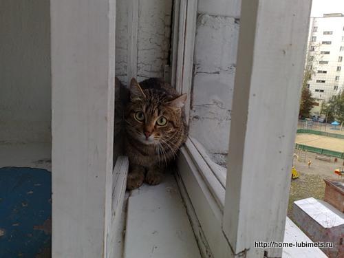 Кот в подъезде
