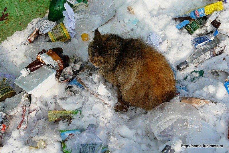 Кошка на мусоре
