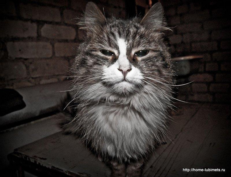 Кот в подвале.