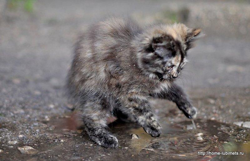 Котенок в луже