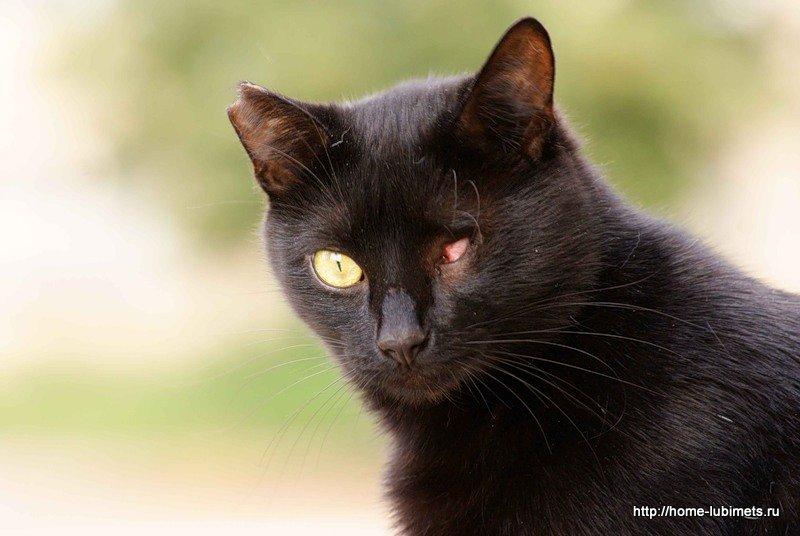 Одноглазый кот