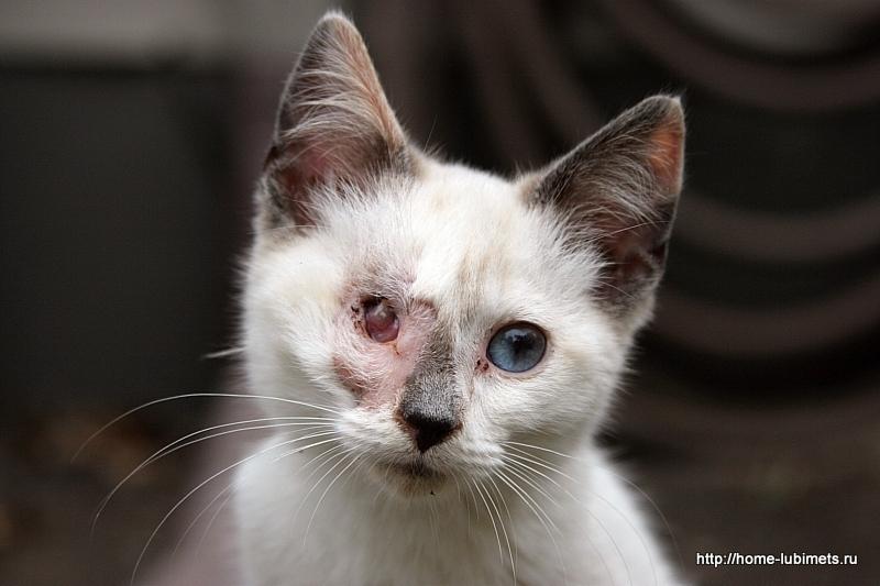 Раненая кошка