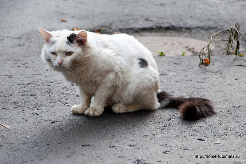 К чему мрут коты