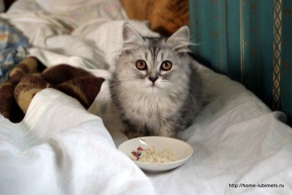 Для чего нужны коты