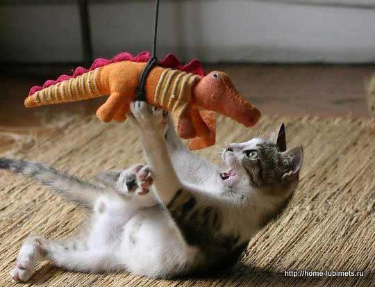 Кошачья планета