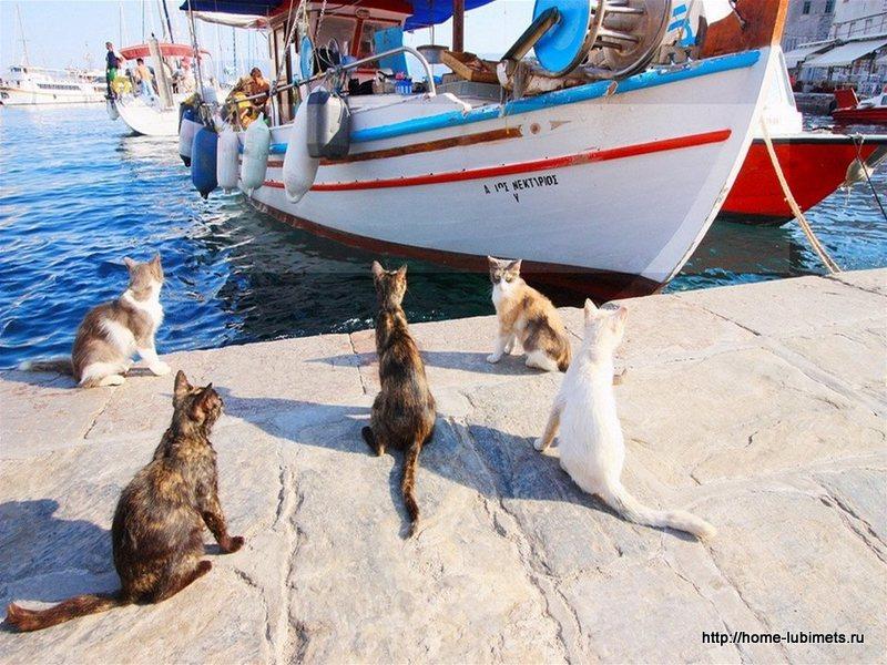 Кошки Греции