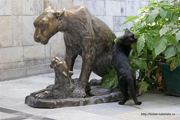 Кошки Кучинга