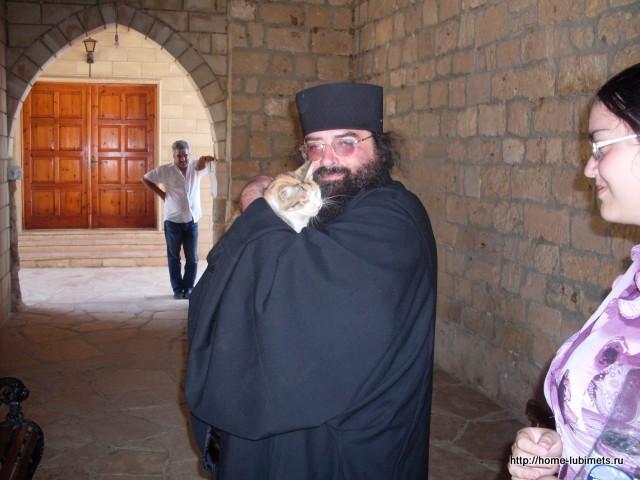 Кошки на Кипре