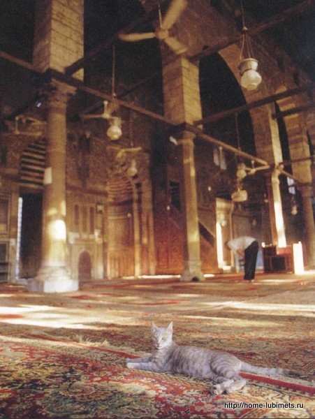 Кошки в исламе