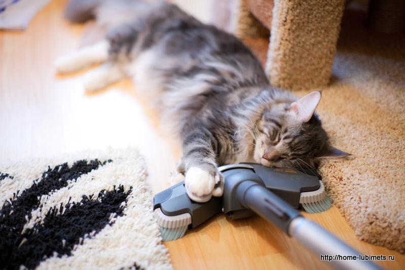 Картинки по запросу кот и пылесос