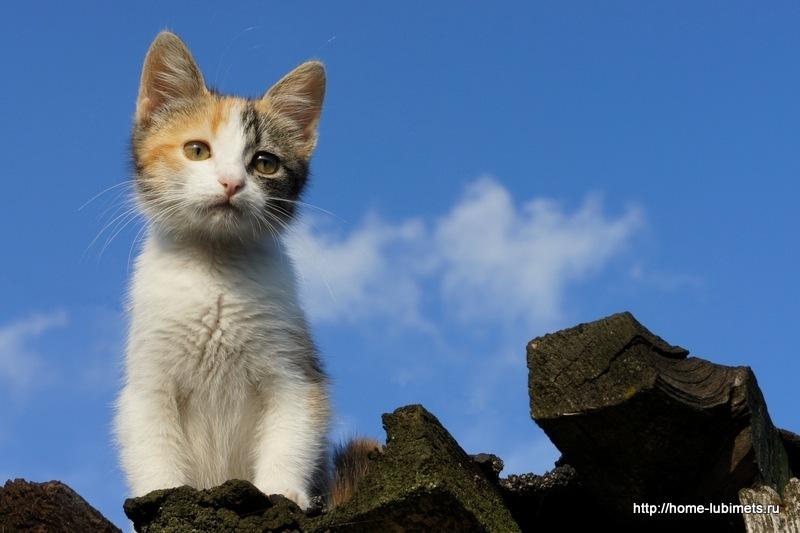 Котёнок на крыше