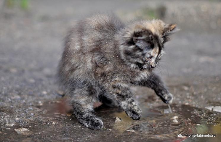 Котёнок в луже