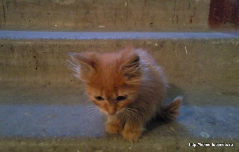 Котёнок в подъезде