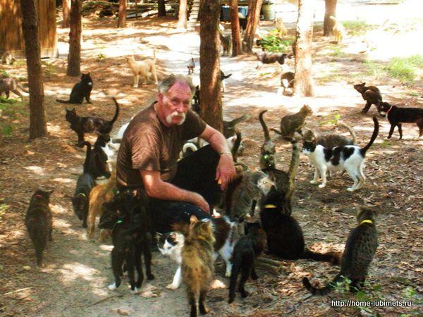 Деревня кошек