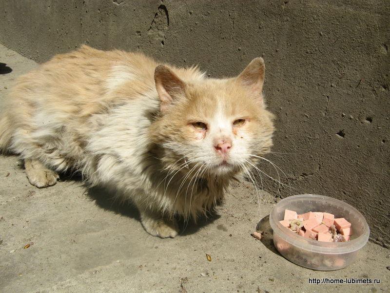 Рыжий слепой кот