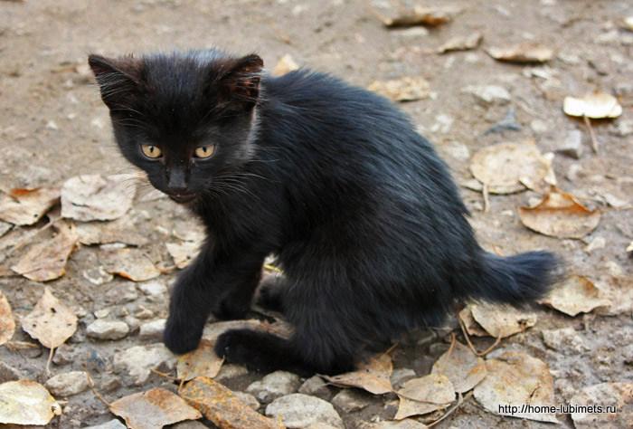хромой котёнок