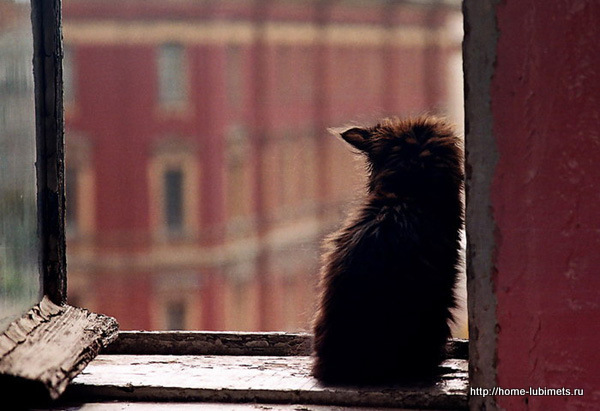 Одинокий кот