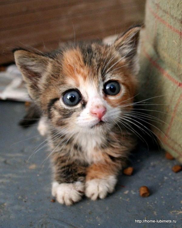 Уличный котёнок
