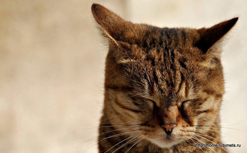 Уши кошки