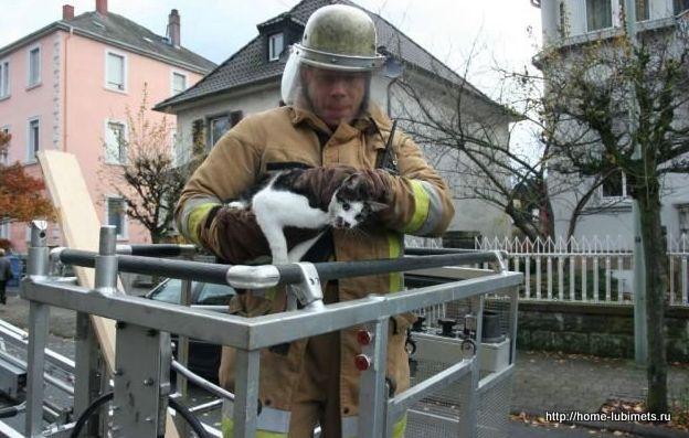 Служба спасения животных