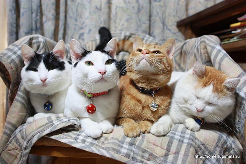День кошек в Японии