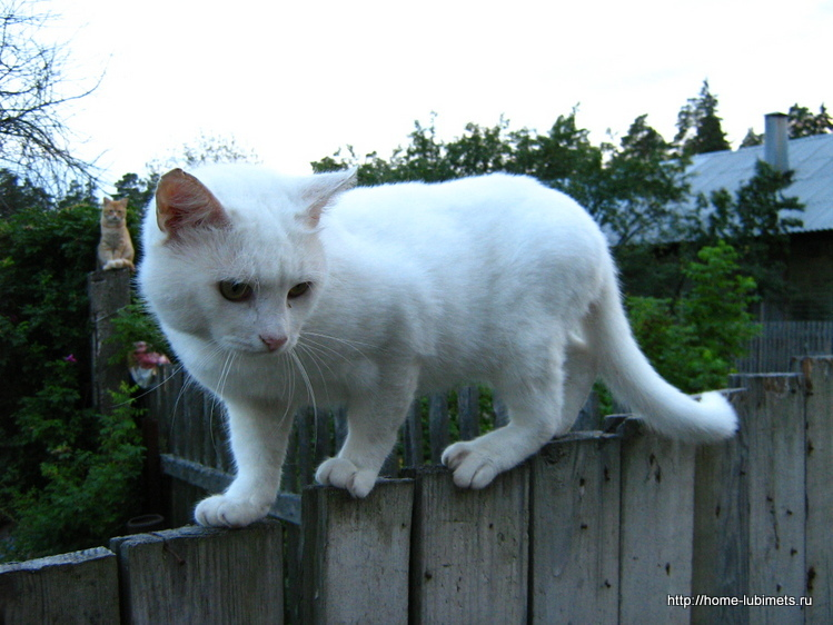 Кошка хочет в приют