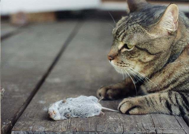 Кормим кошку