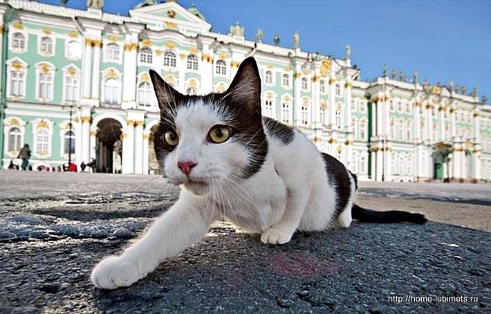 Кошки Эрмитажа