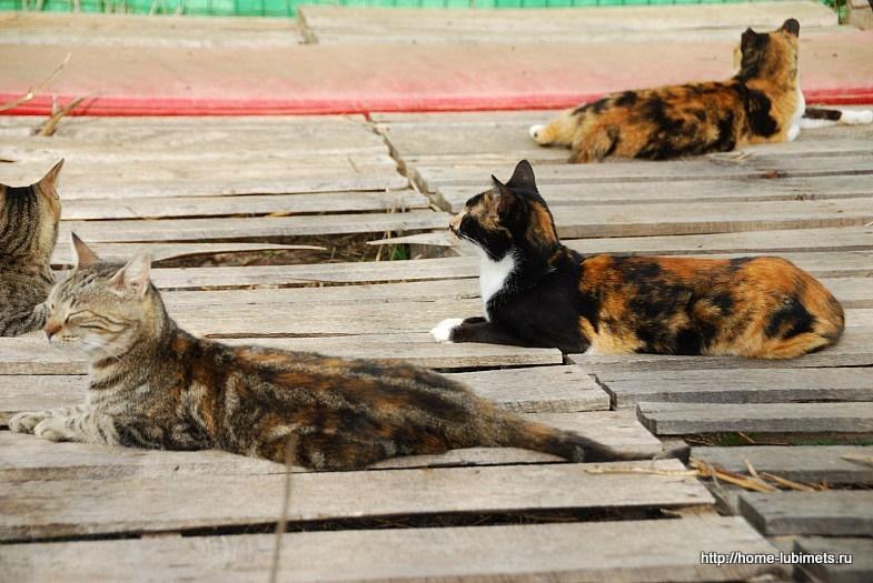 Кошки Израиля