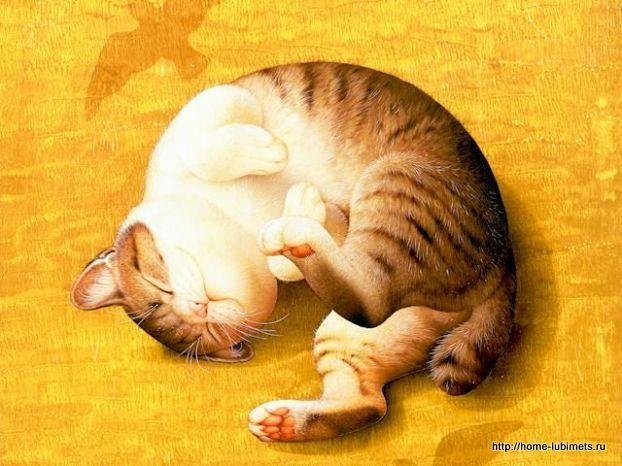 Кошки Макото Мурамацу