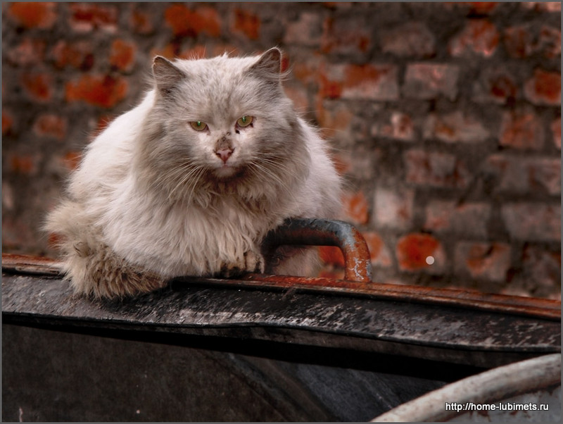 Кошка на помойке