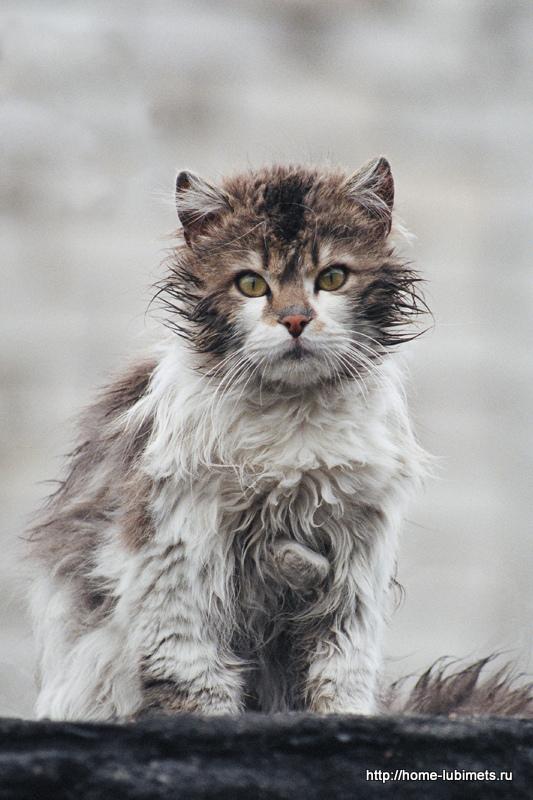 Котёнок под дождём