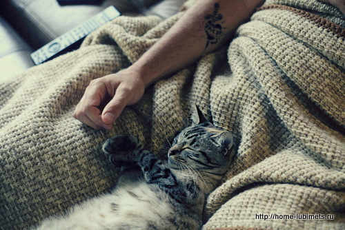 Одинокий мужчина и его одинокая кошка