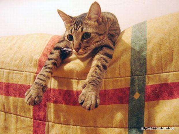 Погладьте кошку