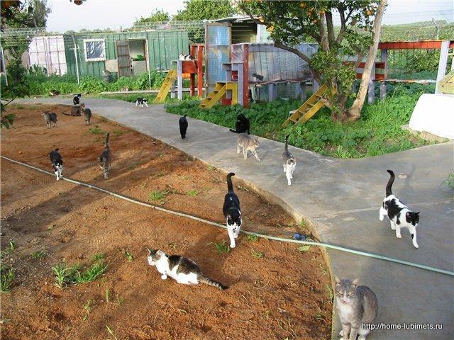 Дом спасения кошек