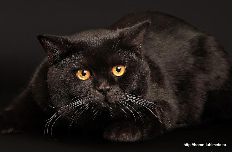 Кот - солнце