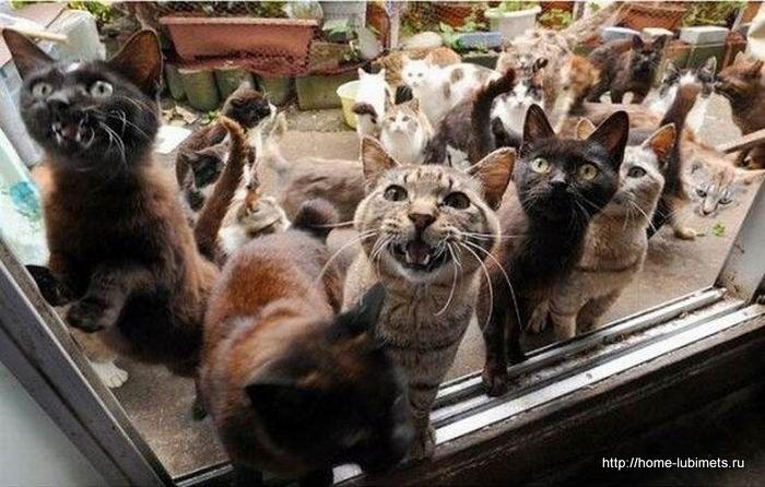 Забота о кошках