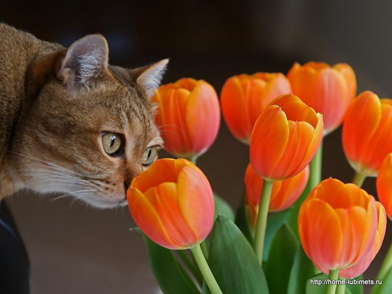День кошек