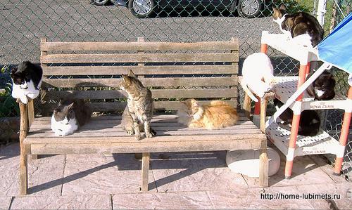 Кошки Германии