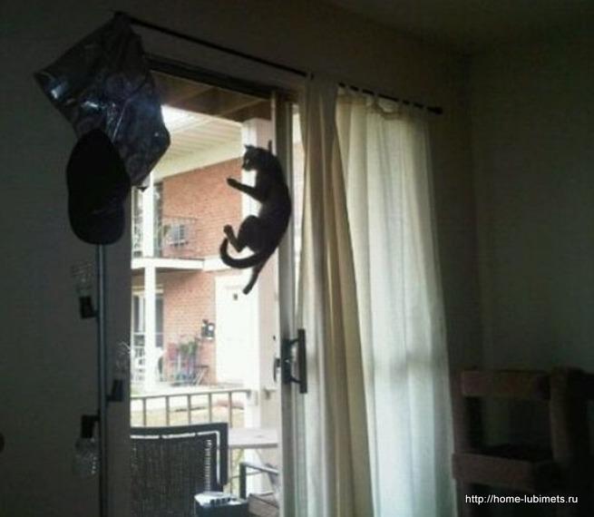 Кот - озорник
