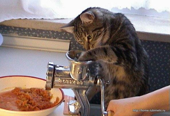 Кот и суп