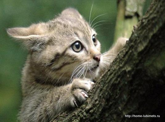 Мимика кошек