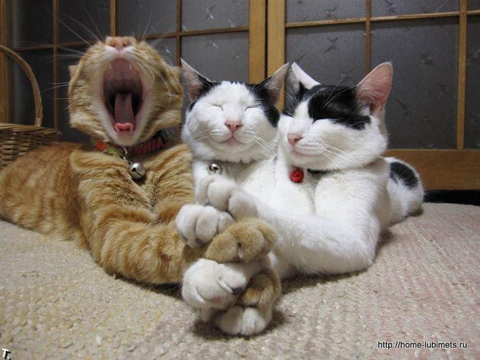 Свободные кошки