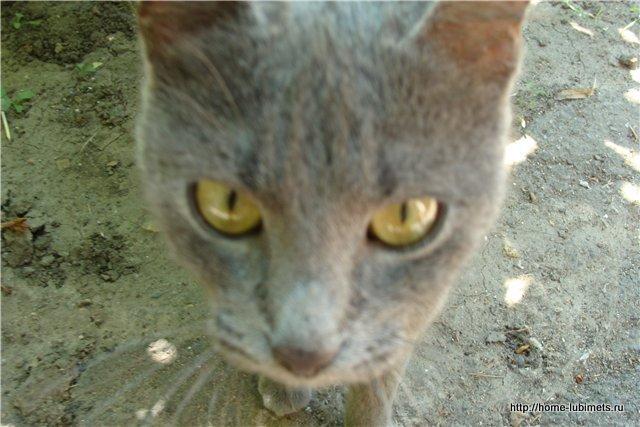 Кошка во дворе