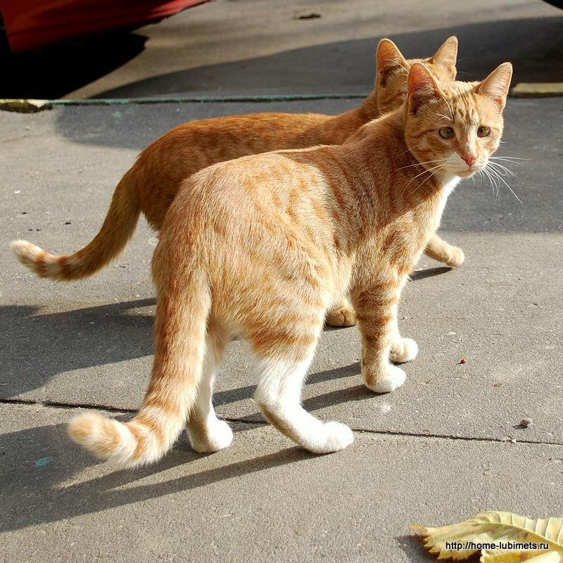 БОбщение кошек
