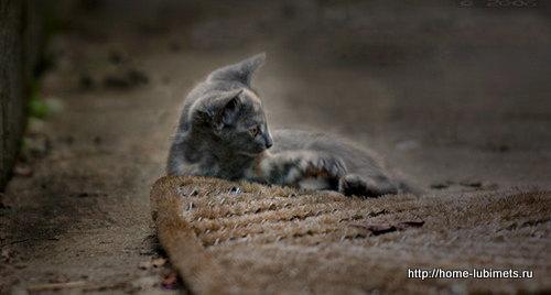 Кошка на улице